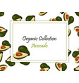 abstract label of avocado fruit vector image