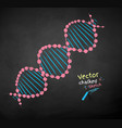 chalk drawn dna structure vector image