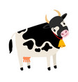 cute cow dairy cow with bell isolated on white vector image vector image
