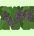 background black currant vector image