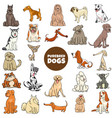 cartoon purebred dogs characters large set vector image