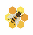 bee and honeycombs isolated vector image vector image