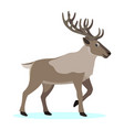 cute forest polar animal cartoon caribou reindeer vector image vector image