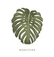 monstera high quality deatiled hand drawn leaf vector image vector image
