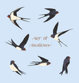 set of simple swallows vector image vector image