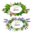spice herbs and food seasoning vector image vector image