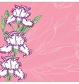 Pink Background with irises vector image vector image