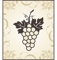 Retro engraving of grapevine - vector | Price: 1 Credit (USD $1)