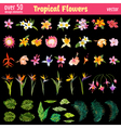 Tropical Flowers Design Elements Set vector image