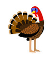turkey thanksgiving traditional turkey vector image