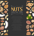 vertical seamless background with colored nuts and vector image vector image