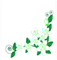 Background Jasmine flower vector image vector image