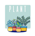 cactus house plants vector image