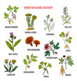 best herbs for alcohol addiction recovery vector image vector image