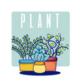 cactus house plants vector image vector image