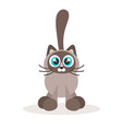 cute siamese cat icon isolated on white vector image vector image