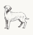 labrador retriever hand drawn dog sketch vector image