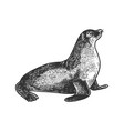 sea lion animal sketch engraving vector image