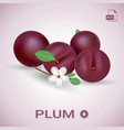 set of fresh ripe plums with leaves and flowers vector image vector image