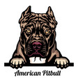 american pitbull - dog breed color image vector image vector image