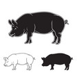 hand drawn pig set vector image vector image