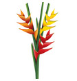 heliconia flower bouquet vector image vector image