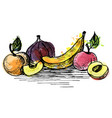 ink drawing banana and peach vector image vector image