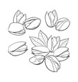 set of hand drawn pistachio nuts single and vector image vector image