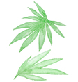 Set of watercolor green tropical leaves vector image