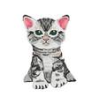 very cute small cat kitten vector image