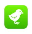 chick icon digital green vector image vector image