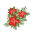 composition of red poinsettia flower isolated over vector image