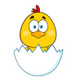 cute yellow chick cartoon character vector image