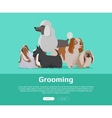 Dog Grooming Banner Long Haired Dog Breeds vector image