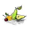 ink drawing pear vector image