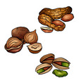 set of colored cartoon nuts peanuts hazelnut vector image