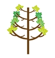 tree plant natural isolated icon vector image vector image