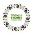 garland with bindweed flowers element for design vector image vector image
