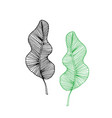 set of tropical monstera leaves outline vector image