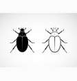 cockchafer melolontha melolontha isolated on vector image vector image