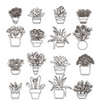 flowers and plants succulent vector image