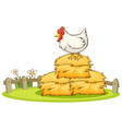 isolated picture chicken in farm vector image vector image