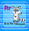 flashcard letter r is for raccoon vector image vector image