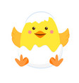 newborn yellow chicken in shell vector image