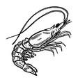 shrimp on white background design element for vector image