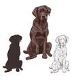 brown labrador dog sitting isolated on white vector image