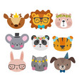cute animals with funny accessories cat lion vector image vector image