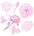decorative flowers set vector image vector image