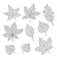 drawn autumn set with oak maple beech sketch vector image vector image