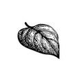 ink sketch heart shaped leaf vector image vector image